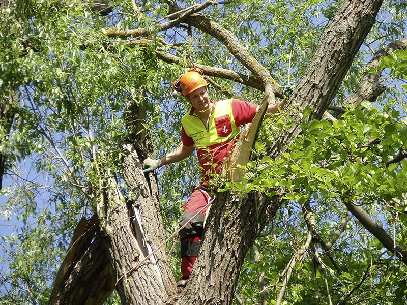 Hasel Unwetterschaden Baumschneiden