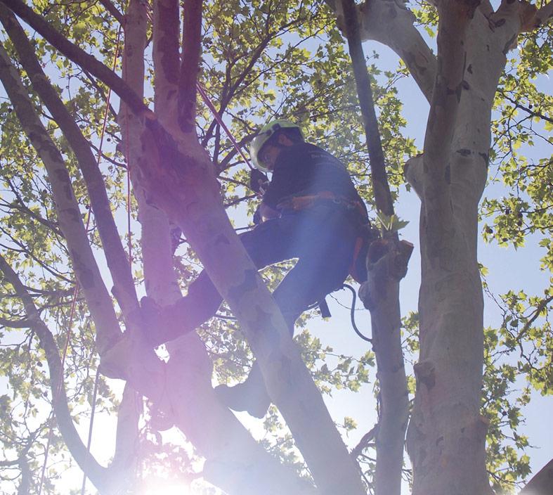 Hasel-Buehl-Baumschneider-Baumkletterer-Pflege-Baum