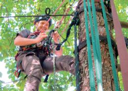 Dienstleistungen-Baum-Hasel-Buehl