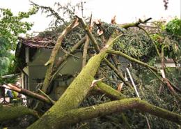 Bereich-Sonderleistungen-Hasel-Sturmschäden