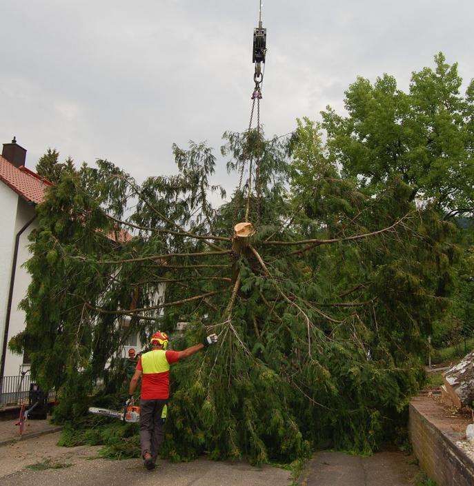 Hasel-Buehl-Baumschneider-Baumkletterer-Bäume-schneiden