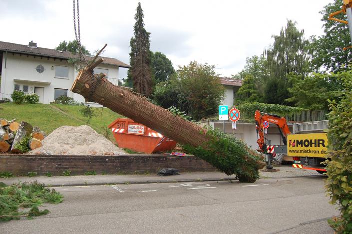 Hasel-Buehl-Baumschneider-Baumkletterer-Baumstumpfentfernung