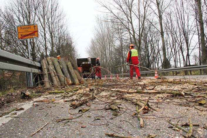 Gemeinde Kommune Bäume schneiden fällen