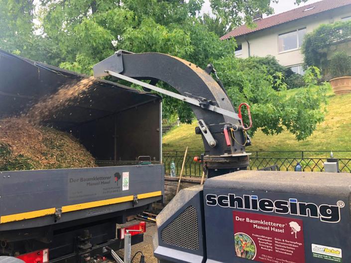 Häckselarbeiten Hasel Baumkletterer Bühl Ottersweier