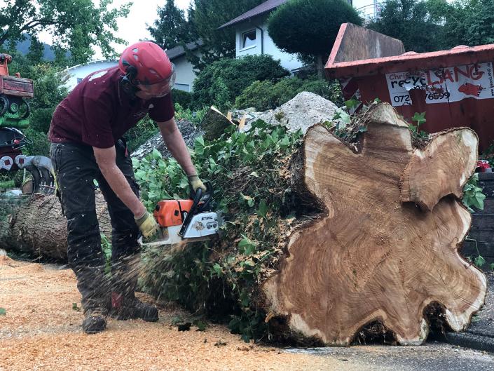 Hasel Baumkletterer Bäume fällen