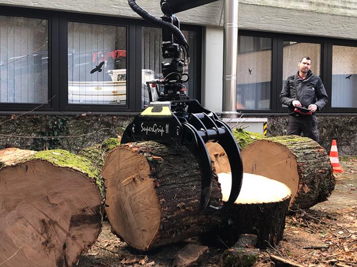 Hasel-Baumkletterer-Baumpflege-Baumfällung