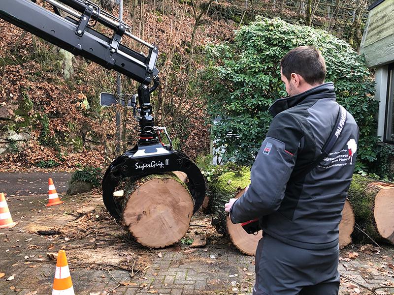 Hasel-Baumkletterer-Baumpflege