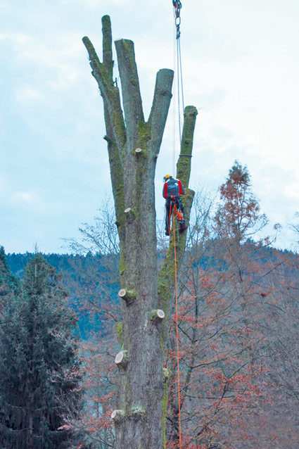 Hasel-Baumkletterer-Buehl-Baden-Baden-Achern