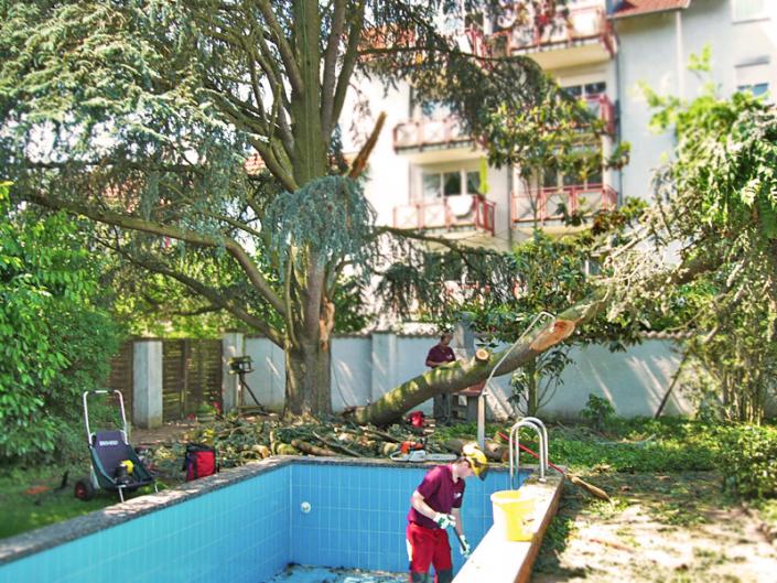 Hasel-Baumkletterer-Unwetterschäden-Baum